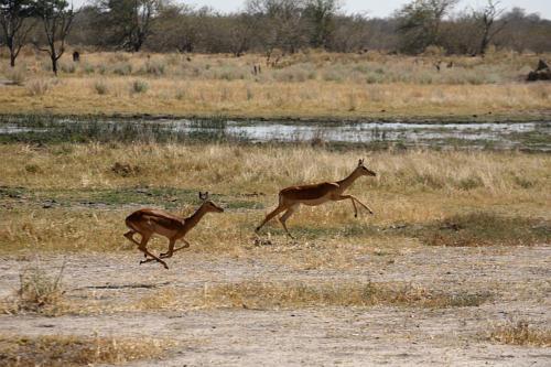 botswana2008_animals_48