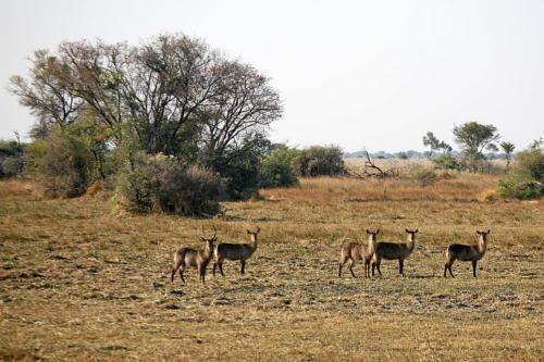 botswana2008_animals_49