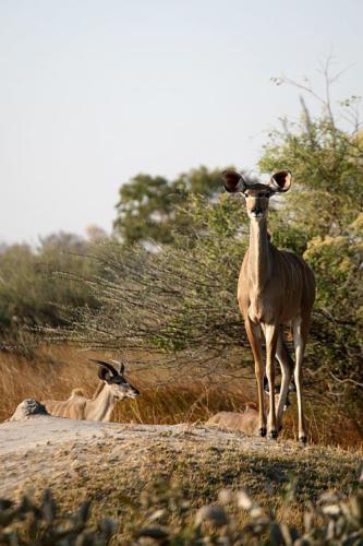 botswana2008_animals_50