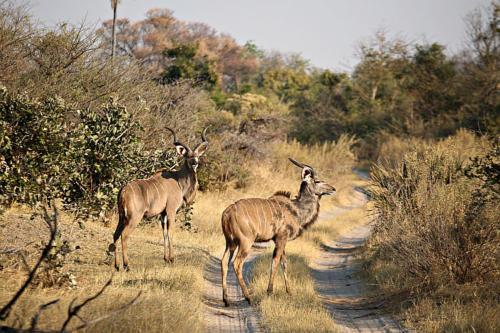 botswana2008_animals_51