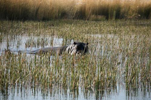 botswana2008_animals_52