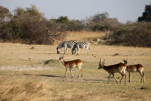 botswana2008_animals_54