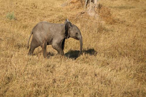 botswana2008_animals_55