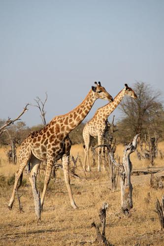 botswana2008_animals_59