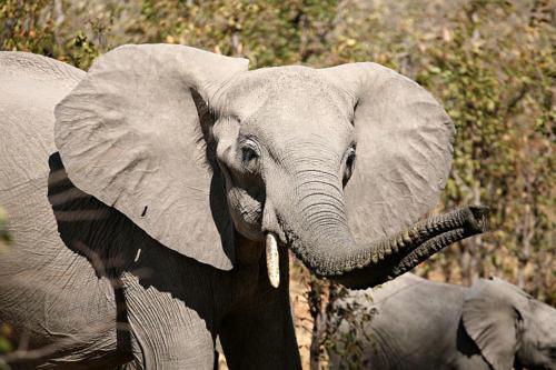 botswana2008_animals_60