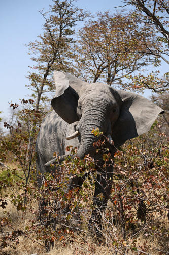 botswana2008_animals_61