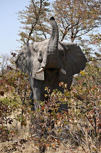 botswana2008_animals_62