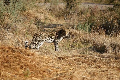 botswana2008_animals_64