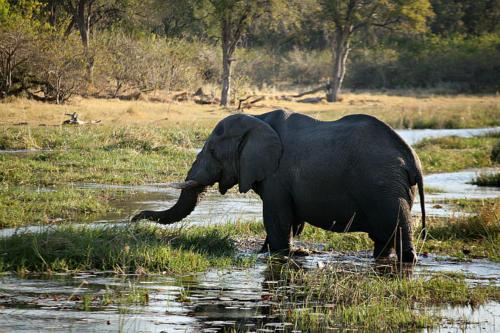 botswana2008_animals_65