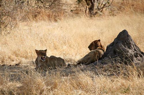 botswana2008_animals_66