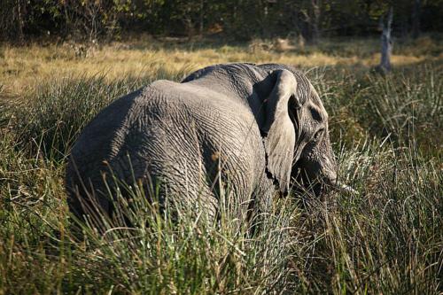 botswana2008_animals_67