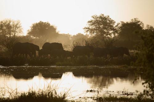 botswana2008_animals_68