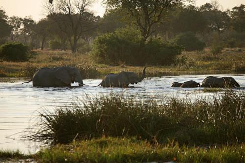 botswana2008_animals_69