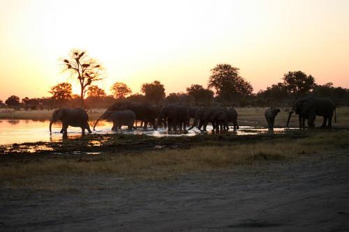 botswana2008_animals_70