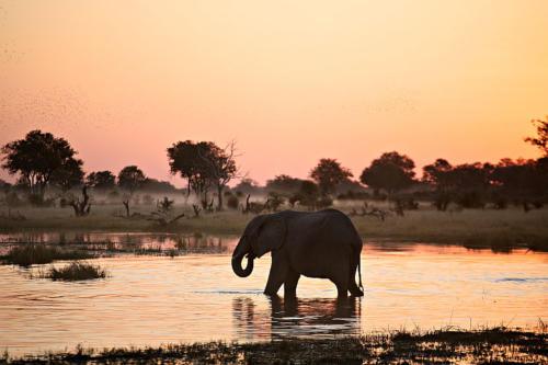 botswana2008_animals_71