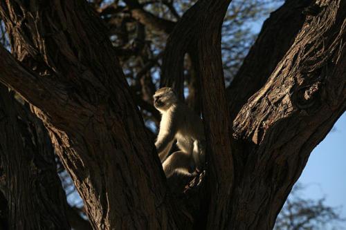 botswana2008_animals_74