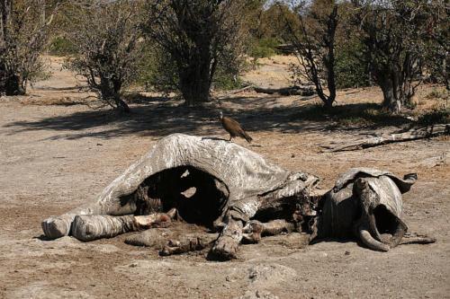 botswana2008_animals_75