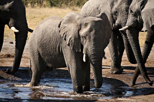 botswana2008_animals_76