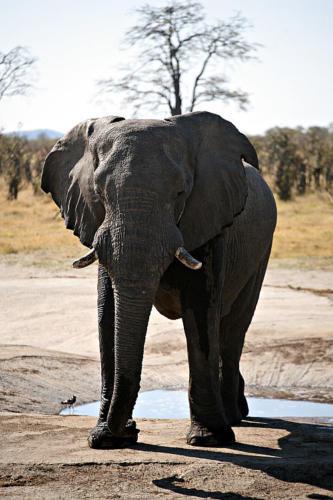 botswana2008_animals_77