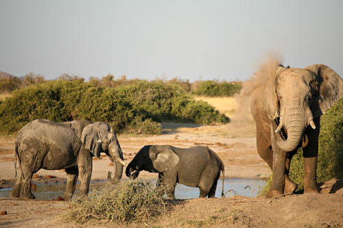 botswana2008_animals_78