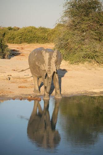 botswana2008_animals_79