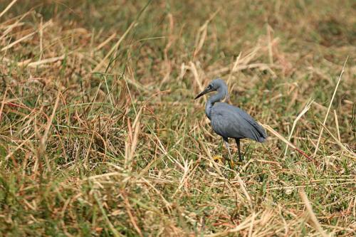 botswana2008_birds_02