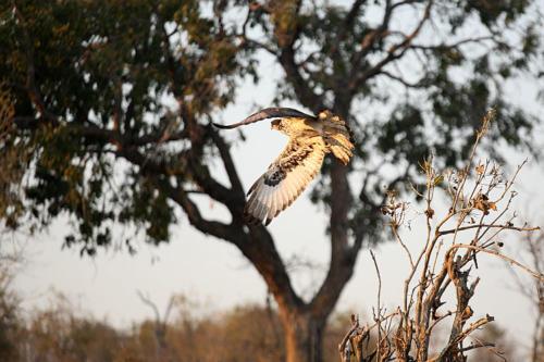 botswana2008_birds_05