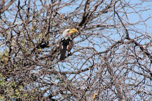 botswana2008_birds_10