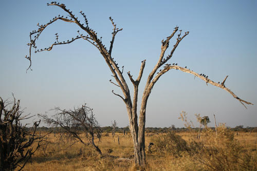 botswana2008_birds_20