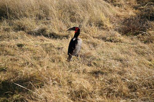 botswana2008_birds_22