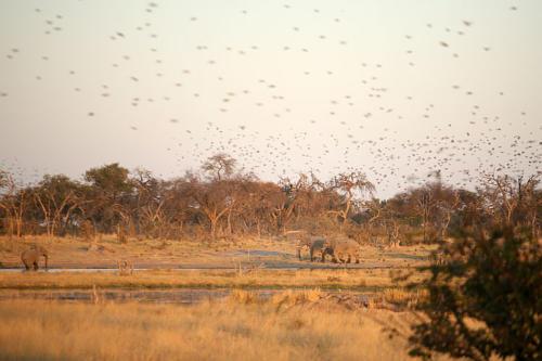 botswana2008_birds_24
