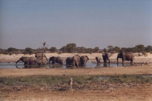 elephanten_2