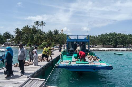 Kokosnussanlieferung auf Naalaafushi