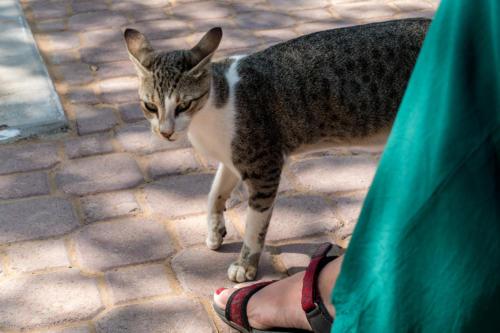 Picknick-Katze