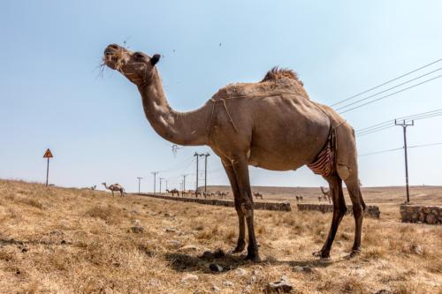 Im Dhofar