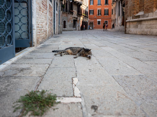 San Polo - Katze