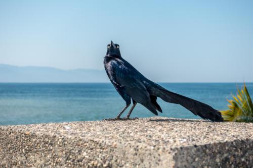 Mexiko, Puerto Vallarta