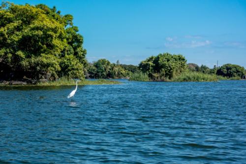 Nicaragua, Nicaragua-See: Reiher