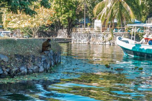 Nicaragua, Nicaragua-See: Affe