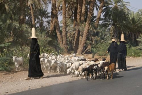 yemen_faces_24